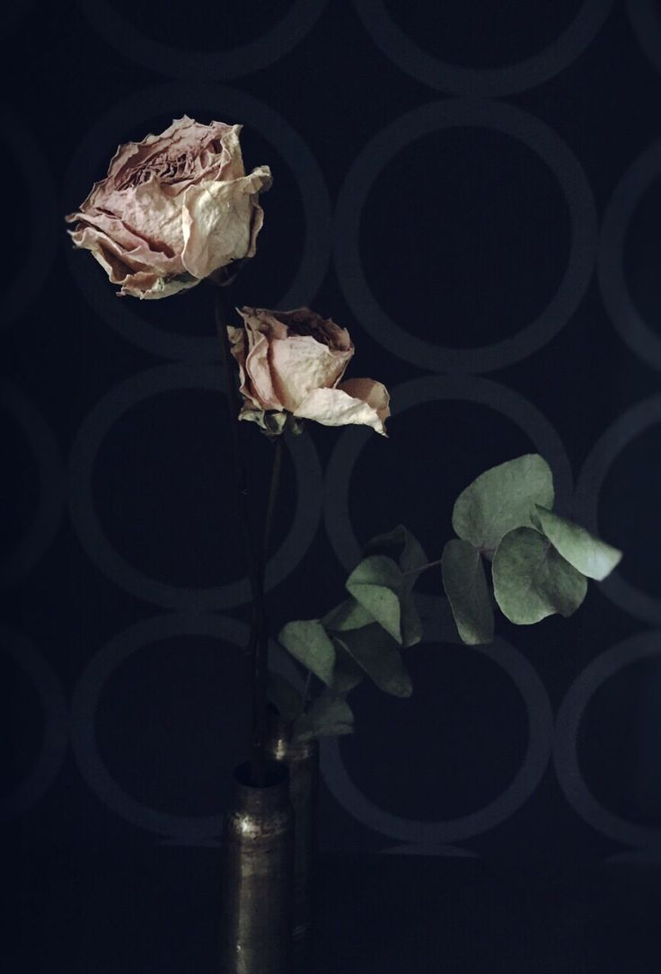 dryflowers.