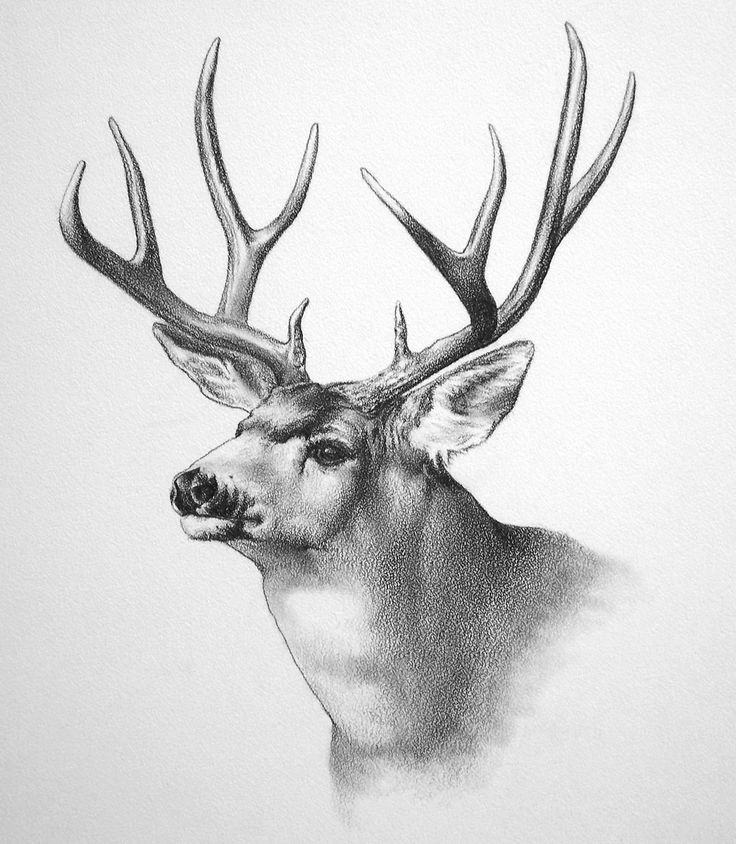 Wildlife art by ken oliver