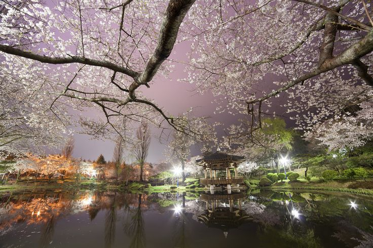 Gyeongju, the city with a 1000 years of brilliant history!