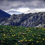 Prado alpino en una mañana lluviosa de primavera. Sierra de Guadarrama por ahenav