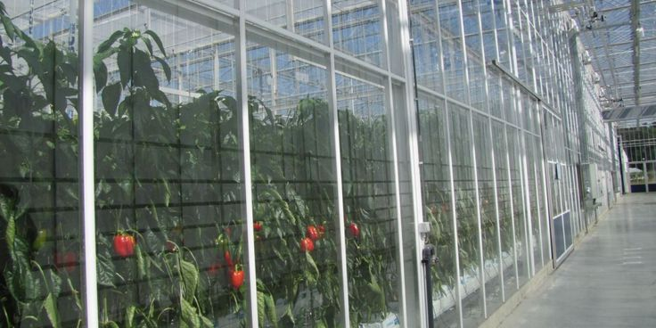 provinciaal beleid glastuinbouw | Antwerpen