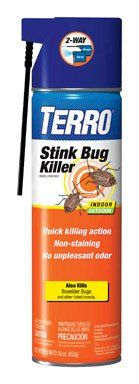 How To Get Rid Of Stink Bugs 101