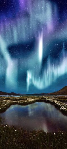 The Northern Light over the marsh landscape with wildflowers in…