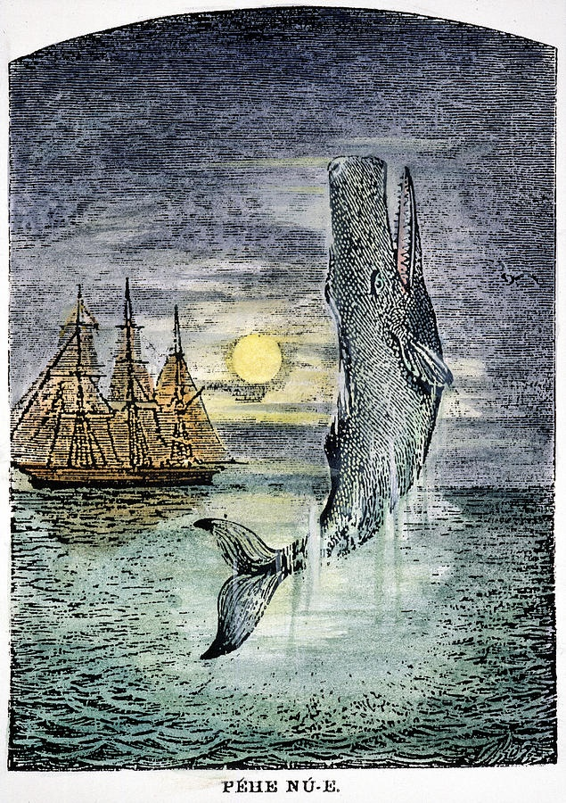 17 Best images about Moby Dick on Pinterest   Literature, Captain ahab and Whale illustration
