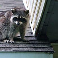 Reliable Animal Control Services In Niagara Falls