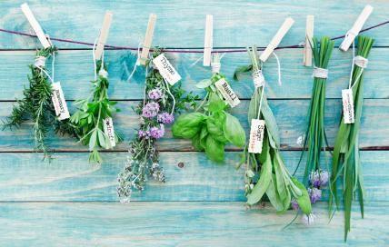 Sieben Gartenkräuter