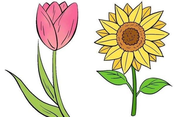 Gambar Sketsa Bunga Matahari Untuk Kolase