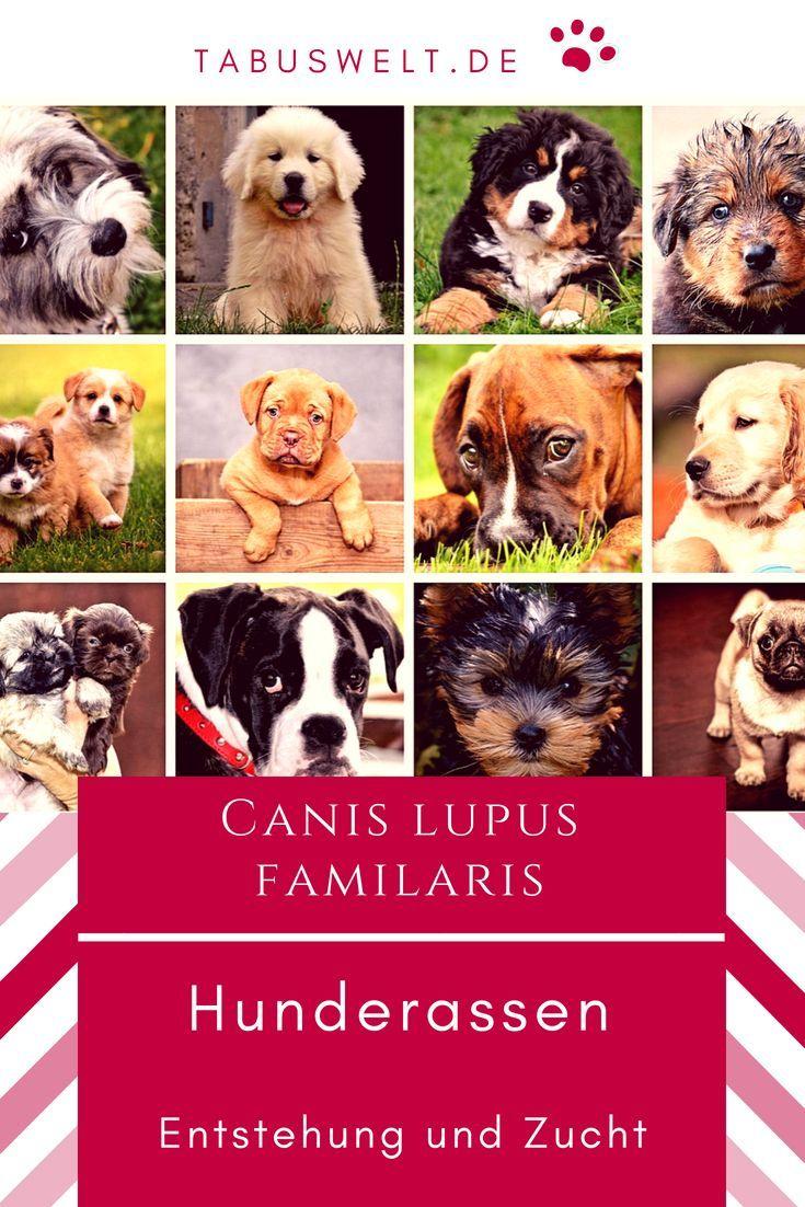 Hunderassen Entstehung Und Zucht Hund Hunde Zucht Hundezucht Wissenswertes Hund Hunde Canis Lupus Familiaris Hunde Rassen Hunderassen Hunde