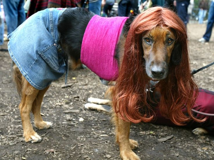 """HILARIOUS pics of animals in costume.  My favorite.... """"Julia Roberts in Pretty Woman""""  lmbo!"""