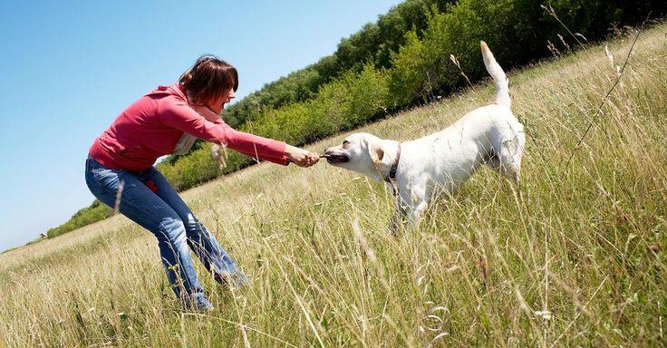 Focus.de - Die zehn größten Irrtümer über das Hundeverhalten - Bellen, Knurren, Schwanzwedeln