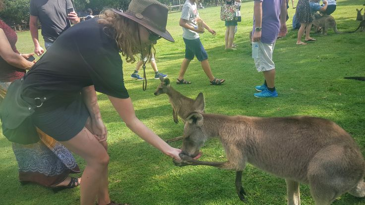 How to spend a day in Brisbane!