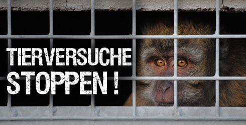 In der Nähe von Straßburg ist die Erweiterung einer Versuchstierzucht mit Platz für 1600 Primaten für Tierversuche geplant. Unterschreib jetzt dagegen!