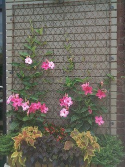 Old chain link fence panel for trellis