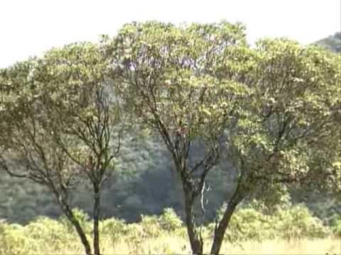 Serviços Ambientais em Baependi - Parte 04/04