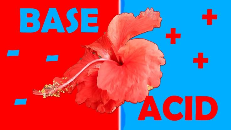 ✔How to Make Acid-Base Indicator | pH Paper At Home | Can a Flower do th...