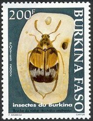 Stamp: (Bruchidius atralineatus) (Burkina Faso) (Insects) Mi:BF 1846,Yt:BF 1281,WAD:BF 006.02