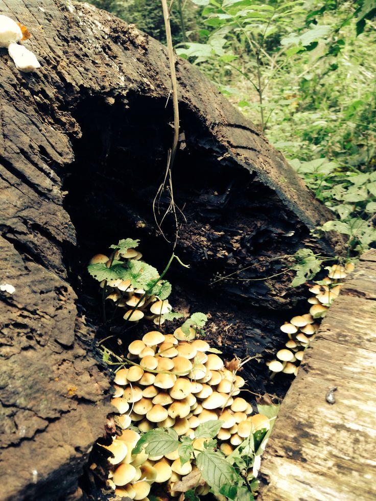 Mushrooms being mushrooms
