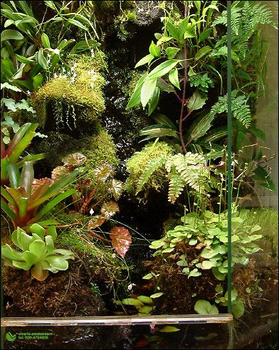 Vivarium detail from vivaria projects