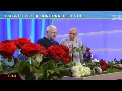 I segreti per la fioritura delle rose