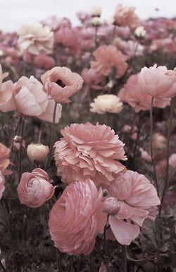 Grunge flowers pink