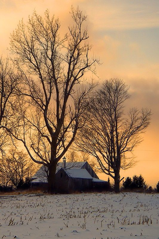 Winter sunset in the countryside THE ANIMALS ARE ALL FED --- THE COWS ARE ALL MILKED......IT IS NOW TIME TO CURL UP WITH A MYSTERY NOVEL (ROVER & PUSS RIGHT THERE AT YOUR FEET)... AND ENJOY A WELL-DESERVED EVENING.....ALL IS RIGHT WITH THE WORLD.........ccp:
