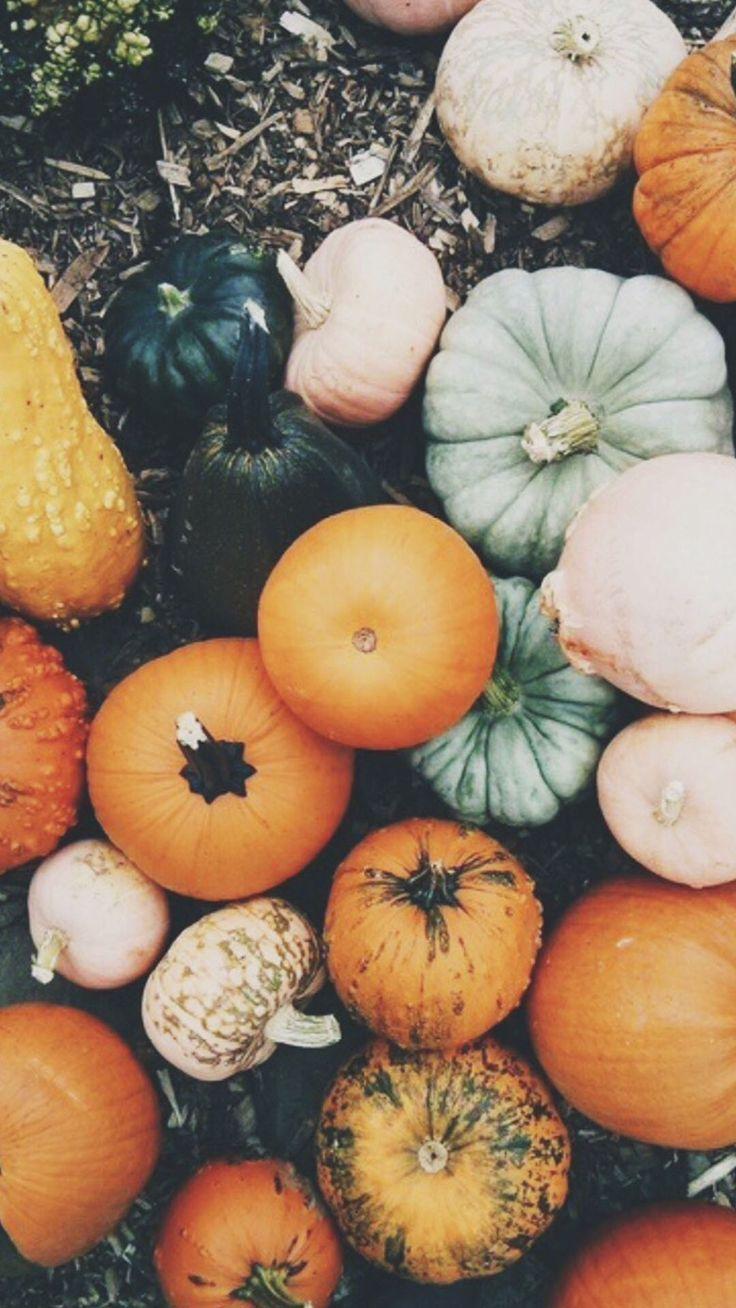 Fall Tumblr Photo Fall Wallpaper Cute Fall Wallpaper Iphone