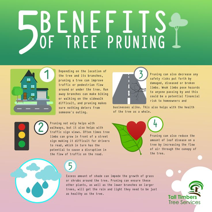 Benefits of tree pruning. To know more about the benefits click here → https://talltimberstreeservices.com.au/