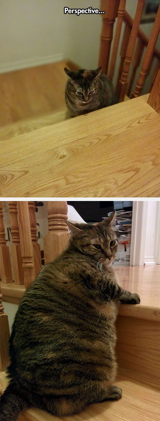 cool-fat-cat-perspective-stairs