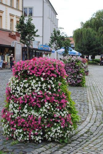 terra flower power - lubań