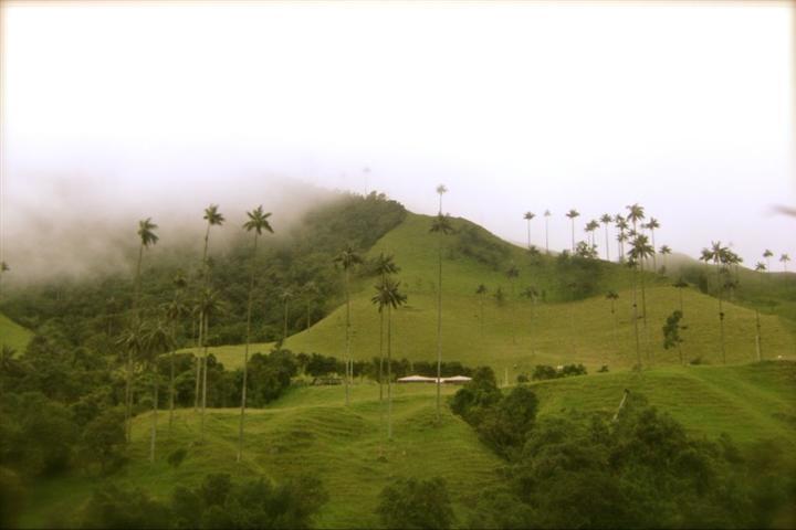 La gran gama de verdes del Valle del Cocora en #Salento #Quindio. #FotoDelDia EnMiColombia.com