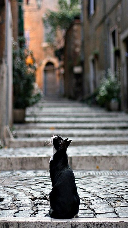 cat in Rome.......ON HIS WAY TO SEE THE NEW POPE WHO IS GOING TO BLESS ALL THE ANIMALS THIS GLORIOUS DAY……I ASKED HIM TO TELL ME ALL ABOUT IT ----HOWEVER, HE ONLY MEOWED IN ITALIAN AND, I THEREFORE DIDN'T UNDERSTAND A SINGLE MEOW…………ccp