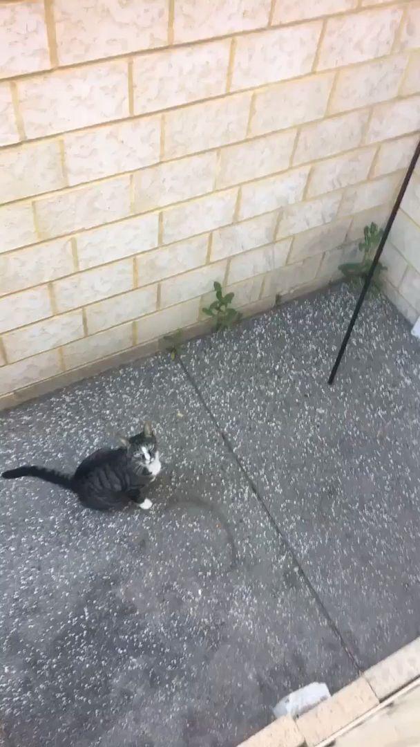 Mission unmöglich Katzenrettung. Meine Kumpelkatze blieb im Hof des Nachbarn stecken, das war seine