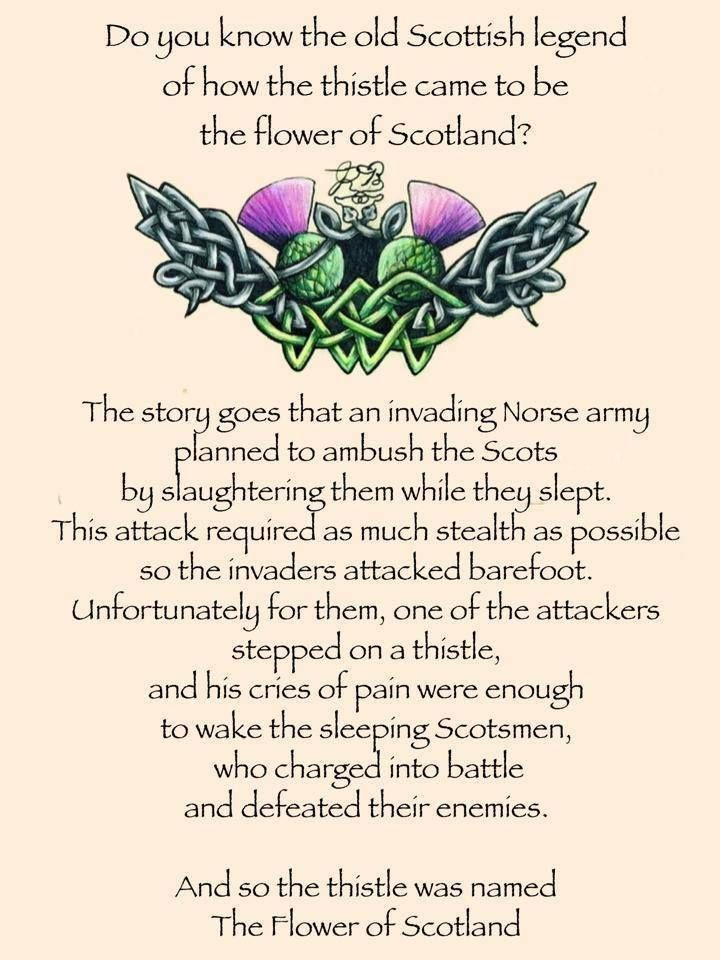 The legend of the thistle.