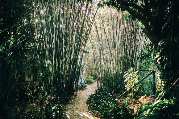 Come along with us —get lostin this magical bamboo labyrinth!