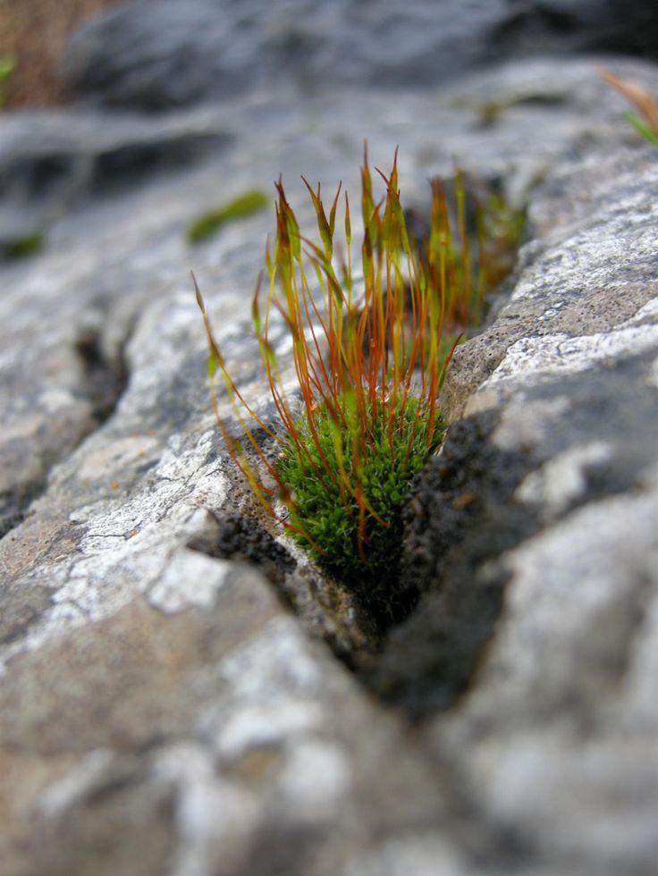 Healthful moss _ Chiara Villata