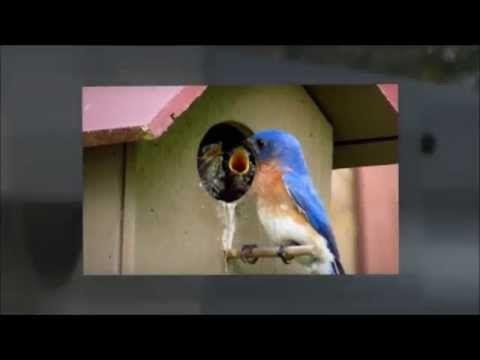 Wild Bird Store Online