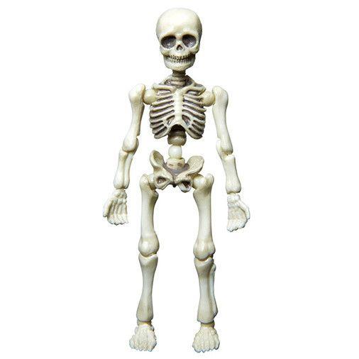 Posable Skeleton - Human 01