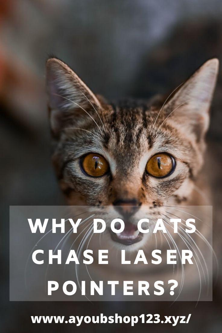 Pin On Cat Care Behavior