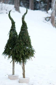Nu är vi snart tillbaks! Ett skönt gäng med granar som i november och början på december skjuter upp som ogräs här i Mjölarp. Vi va...
