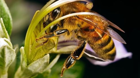 Center for Food Safety | News Room | A Miracle For Bees