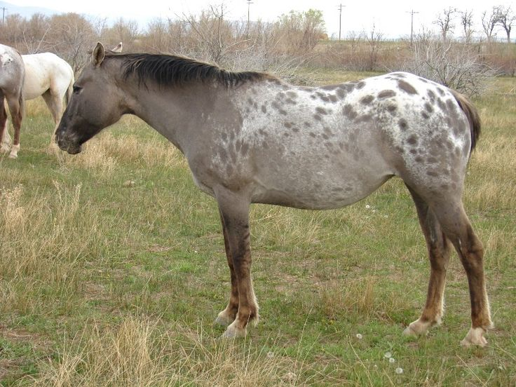 1000 images about horse colors on pinterest horses for