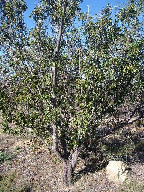 Leigh's Jesse tree