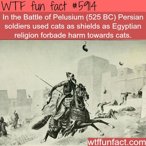 Battle of Pelusium - WTF fun facts