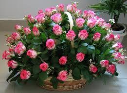 """Képtalálat a következőre: """"rózsaszín rózsák"""""""