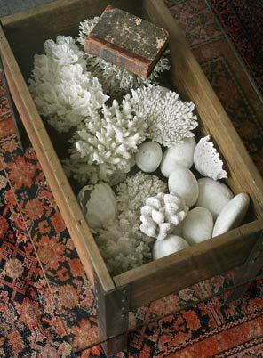 A coffee table sporting a glass top is used to display a collection of items from the sea. Items are available at Joanna Votilla's antique store, 1715 W. 45th St. in Kansas City