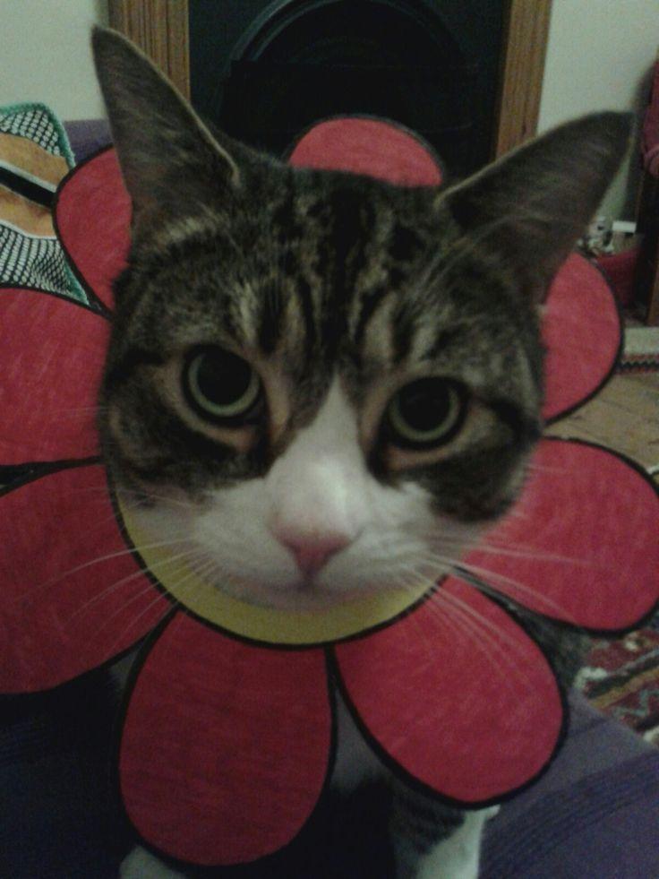 I'm a beautiful little flower...