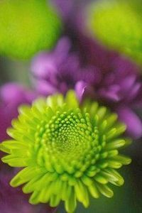 Wedding, Flowers, Green, Purple