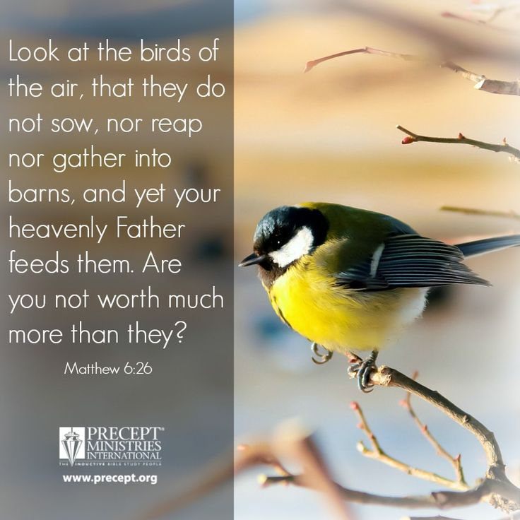 """Look at the birds of the air, that they do not sow, nor reap nor gather into barns, and yet your heavenly Father feeds them. Are you not worth much more than they?"" (Matthew 6:26) www.precept.org"