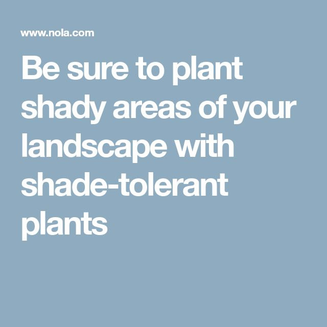 Be sure to plant shady areas of your landscape with shade-tolerant plants