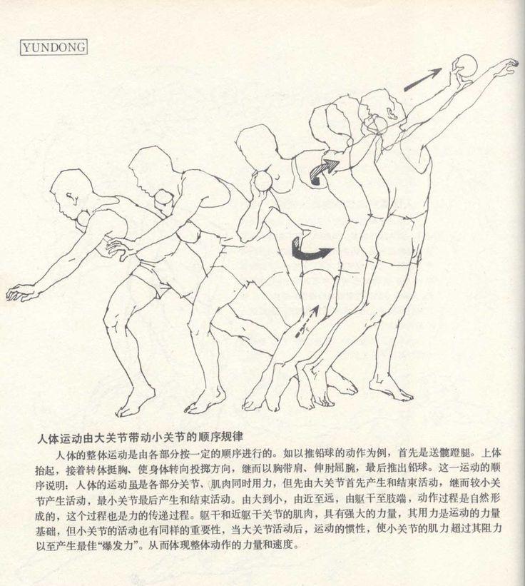 人体造型基础——人体运动规律 - 水木白艺术坊 - 贵阳画室 高考美术培训